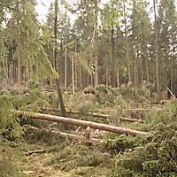 Kyrill-Bodental-2007-002