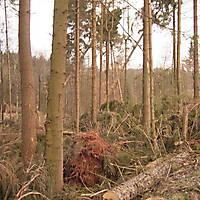 Kyrill-Bodental-2007-008