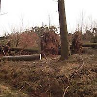 Kyrill-Bodental-2007-009