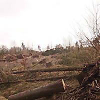 Kyrill-Bodental-2007-010