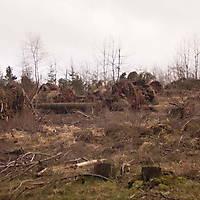Kyrill-Bodental-2007-011