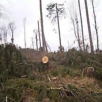 Kyrill-Bodental-2007-021