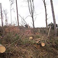 Kyrill-Bodental-2007-022