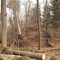 Kyril-Emderwald-2007-002