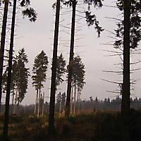 Kyril-Emderwald-2007-005