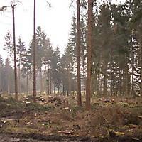Kyril-Emderwald-2007-010