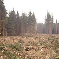 Kyril-Emderwald-2007-011