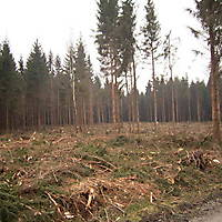 Kyril-Emderwald-2007-012