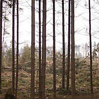 Kyril-Emderwald-2007-024