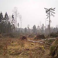 Kyril-Emderwald-2007-041