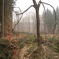 Kyril-Emderwald-2007-051