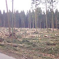 Kyrill-Emderwald-2007-052