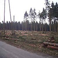 Kyrill-Emderwald-2007-054