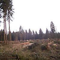 Kyrill-Emderwald-2007-056