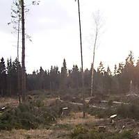 Kyrill-Emderwald-2007-064