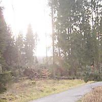 Kyrill-Emderwald-2007-065