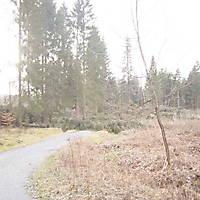 Kyrill-Emderwald-2007-067
