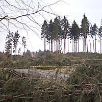 Kyrill-Emderwald-2007-070