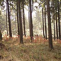 Sturm-Kyril-2007-005